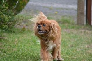 Banksia Park Puppies_rusty