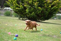 Banksia Park Puppies_Spicey