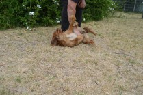 britz-banksia-park-puppies-8-of-18