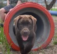 FB Banksia Park Puppies Meeka 16