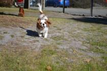 Oddball- Banksia Park Puppies - 18 of 33