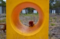 rosana-banksia-park-puppies-1-of-16