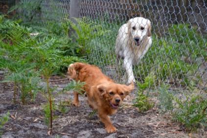 rosana-banksia-park-puppies-13-of-16