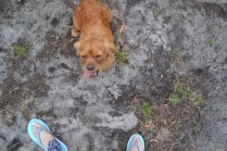 rosana-banksia-park-puppies-16-of-16