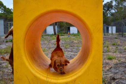 rosana-banksia-park-puppies-3-of-16