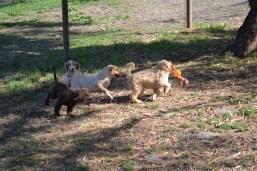 Banksia Park Puppies Missy