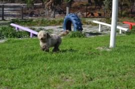 Banksia Park Puppies Fooseball - 14 of 17
