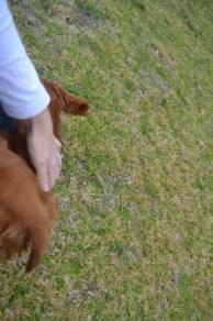 Banksia Park Puppies Hala - 14 of 31
