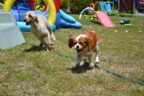 banksia-park-puppies-hera-11-of-16