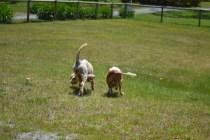 banksia-park-puppies-hera-12-of-16