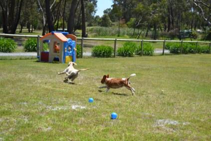 banksia-park-puppies-hera-9-of-16