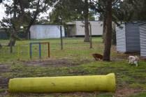 banksia-park-puppies-missy-10-of-40