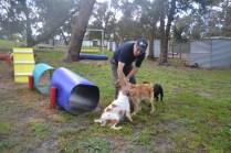 banksia-park-puppies-missy-28-of-40