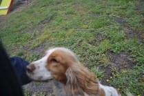 banksia-park-puppies-missy-6-of-40
