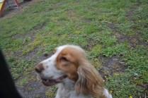 banksia-park-puppies-missy-7-of-40