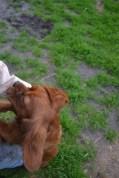 Banksia Park Puppies Sage - 12 of 14