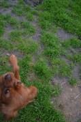 Banksia Park Puppies Sage - 13 of 14