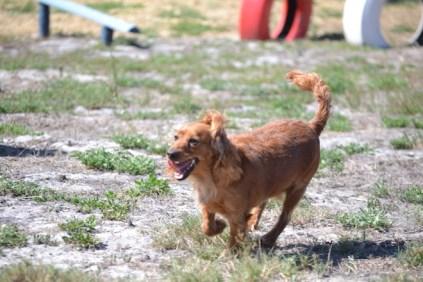 Banksia Park Puppies Willbee - 1 of 54 (28)
