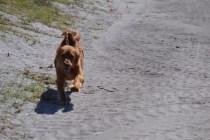 Banksia Park Puppies Willbee - 1 of 54 (52)