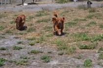 Banksia Park Puppies Willbee - 1 of 54 (7)