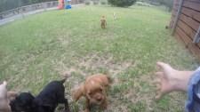 Banksia Park Puppies WillBee