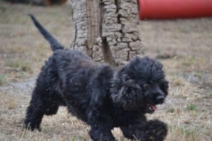 Banksia Park Puppies_Smooches