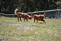 sage-banksia-park-puppies-8-of-13