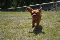 sage-banksia-park-puppies-9-of-13