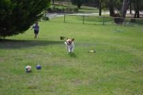 Banksia Park Puppies Angela