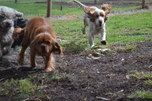 banksia-park-puppies-ariel-20-of-20