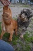 Banksia Park Puppies Cozy