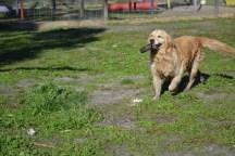 Banksia Park Puppies Elle 9