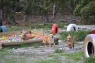 Banksia Park Puppies Sara - 16 of 39