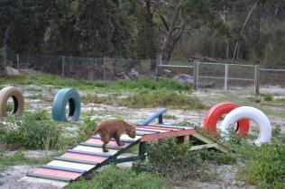 Banksia Park Puppies Sara - 27 of 39