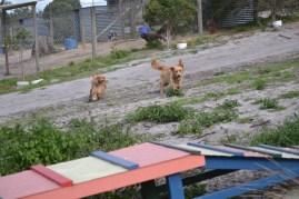 Banksia Park Puppies Sara - 3 of 39