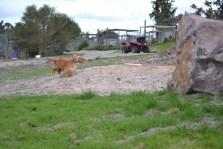 Banksia Park Puppies Sara - 6 of 39