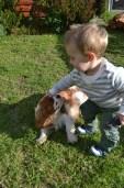 Banksia Park Puppies Trini