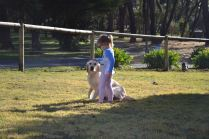 Banksia Park Puppies Oopsy