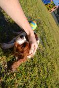 Banksia Park Puppies Tayla