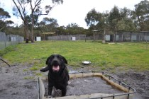 banksia-park-puppies-char-12-of-14