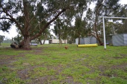 banksia-park-puppies-cosmo-5-of-22