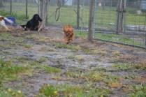 banksia-park-puppies-crunchie-8-of-25