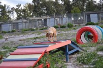 Banksia Park Puppies Cuzzle - 7 of 14