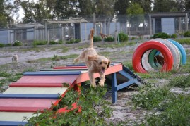 Banksia Park Puppies Cuzzle - 8 of 14