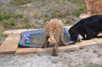 banksia-park-puppies-jacinta-wooster-ella-swoosh-48-of-51