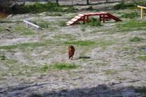 Banksia Park Puppies Poko - 4 of 19