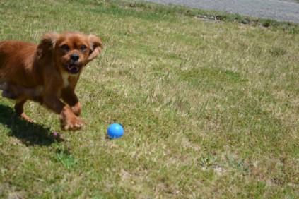 shazzoom-banksia-park-puppies-10-of-22