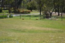 shazzoom-banksia-park-puppies-5-of-22