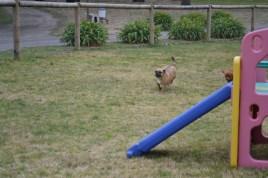 Banksia Park Puppies Monty - 10620