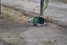Banksia Park Puppies Ariel and Swoosh